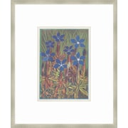 Melissa Van Hise Alpine Flora XV Framed Graphic Art