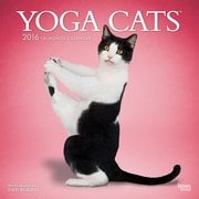 "2016 BrownTrout Publishing Cats 12"" x 12"" Square Yoga Cats (9781470000000)"