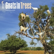 2016 Browntrout Publishers Wildlife12x12 Square Goats in Trees (9781465040992)