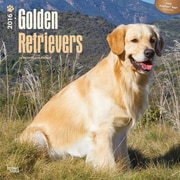"""2016 Browntrout Publishers Dog Breeds, 12"""" x 12"""", Square, Golden Retrievers (9781470000000)"""