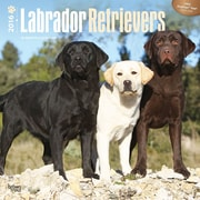 "2016 BrownTrout Publishing Dog Breeds / Labrador Retrievers 12"" x 12"" Square (9781470000000)"