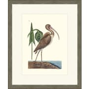 Melissa Van Hise Antique Flora And Fauna II (A) by Choate Design Framed Graphic Art