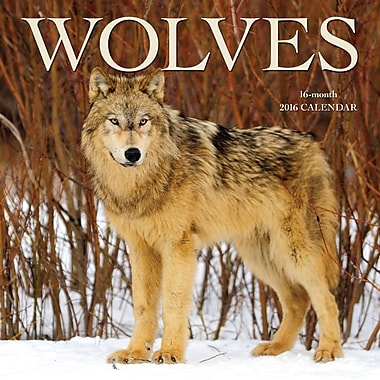 2016 BrownTrout Publishers 12-Month Wall Calendar, Wolves, 12