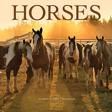 BrownTrout Publishers – Calendrier mural 2016, 12 mois, Horses, 12 x 12 po, anglais