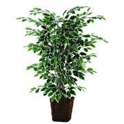 Vickerman Variegated Ficus Bush Square Willow Plant in Planter