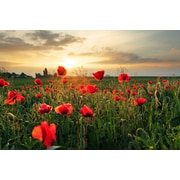 3 Panel Photo Tulips in the Field Photographic Print on Wrapped Canvas; 24'' H x 36'' W x 1'' D