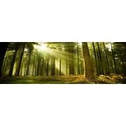 3 Panel Photo Woodland Glade Photographic Print on Canvas; 24'' H x 72'' W x 1'' D