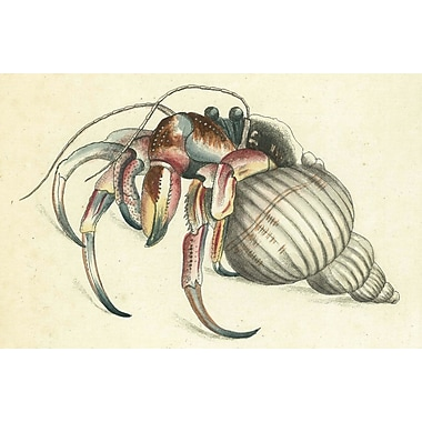 Belle Banquet Hermit Crab Placemat (Set of 6)