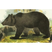 Belle Banquet Bear Placemat (Set of 6)