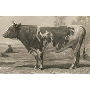 Belle Banquet Bovine Placemat (Set of 6)