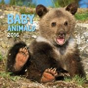 Baby Animals 2016 Wall Calendar