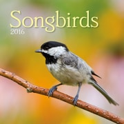 Songbirds 2016 Wall Calendar