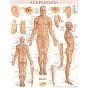 BarCharts, Inc. - QuickStudy® Acupressure Poster Reference Set