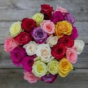 The Bouqs Company Confetti Roses