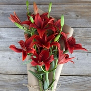 The Bouqs Company Sequoia Lilies