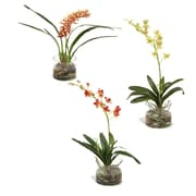 Distinctive Designs Assorted Silk Orchid Plants in Glass Cylinder (Set of 3)