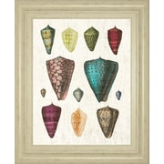 ClassyArtWholesalers Colorful Shell II by Wild Apple Portfolio Framed Graphic Art