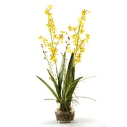 D & W Silks Orchids with River Grass and Orchid Greenery in Glass Dish