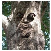 GenuineTreePeeple Whistlin Pete Tree Face
