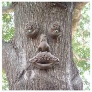 GenuineTreePeeple Mr.Mapleshade Tree Face