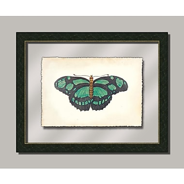 Melissa Van Hise Butterfly lV Framed Graphic Art