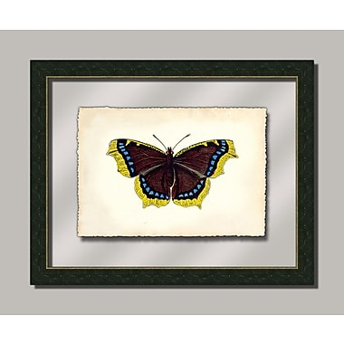 Melissa Van Hise Butterfly Vll Framed Graphic Art