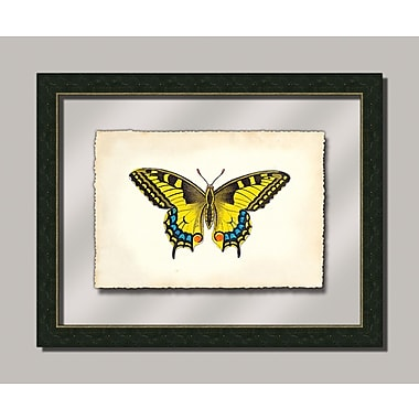 Melissa Van Hise Butterfly Xl Framed Graphic Art