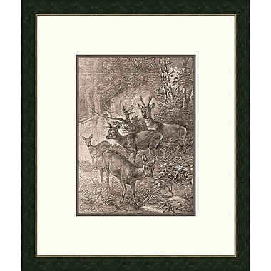 Melissa Van Hise Forest Dwellers lV Framed Graphic Art