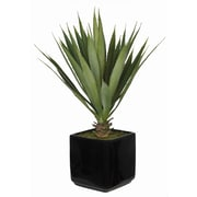 House of Silk Flowers Artificial Desk Top Plant in Vase; Black