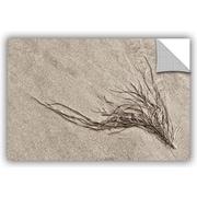 ArtWall 'Beach Find I' by Cora Niele Graphic Art; 16'' H x 24'' W x 0.1'' D