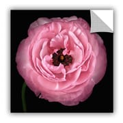 ArtWall 'Pink I' by Cora Niele Photographic Print on Canvas; 36'' H x 36'' W x 0.1'' D