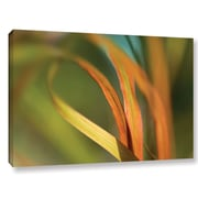 ArtWall 'Autumn Grass' by Cora Niele Photographic Print on Wrapped Canvas; 12'' H x 18'' W x 2'' D