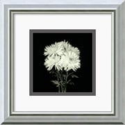 Amanti Art 'Flower Series IX' by Walter Gritsik Framed Photographic Print