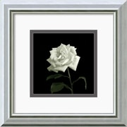 Amanti Art 'Flower Series VIII' by Walter Gritsik Framed Photographic Print