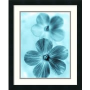 Amanti Art 'Forget Me Not Blue I' by Teton Parchment Framed Graphic Art