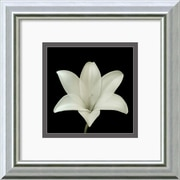 Amanti Art 'Flower Series VII' by Walter Gritsik Framed Photographic Print