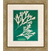 PTM Images Emerald Coral II Gicl e Framed Graphic Art
