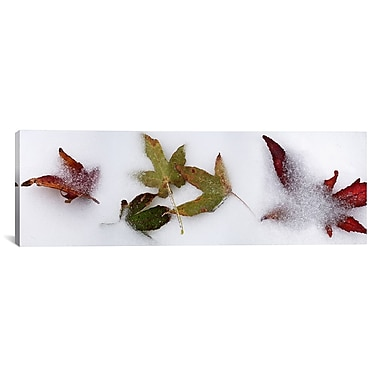 iCanvas Panoramic Leaves Photographic Print on Wrapped Canvas; 12'' H x 36'' W x 1.5'' D