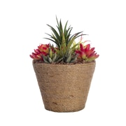 """Laura Ashley 10.5"""" Tall Succulents in 8.5""""W x 8.5""""D Hemp Rope Container (VHA102444)"""