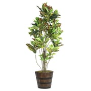 "Laura Ashley 80"" Tall Croton Tree with Multiple Trunks in Planter (VHX110216)"