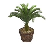 "Laura Ashley (VHX111217) 56"" Tall Cycas Palm Tree in Planter"