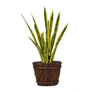 "Laura Ashley 43"" Tall Snake Plant in Planter (VHX121217)"