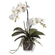 Jane Seymour Botanicals Orchid Phalaenopsis in Glass Vase