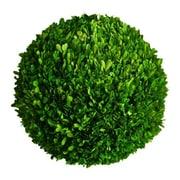 Mills Floral Boxwood Ball Desk Top Plant; 10'' H x 10'' W x 10'' D