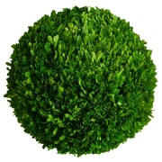 Mills Floral Boxwood Ball Desk Top Plant; 16'' H x 16'' W x 16'' D