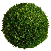Mills Floral Boxwood Ball Desk Top Plant; 12'' H x 12'' W x 12'' D