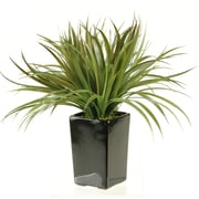 D & W Silks Grass in Square Ceramic Planter