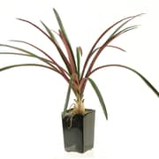 D & W Silks Areca Grass in Square Ceramic Planter