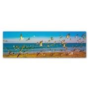 "Trademark Fine Art ''Florida Beach Birds'' by Preston 10"" x 32"" Canvas Art (EM0516-C1032GG)"