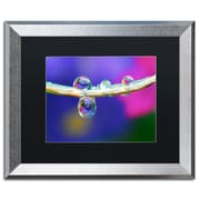 "Trademark Fine Art ''Double Drops'' by Steve Wall 16"" x 20"" Black Matted Silver Frame (SW0007-S1620BMF)"